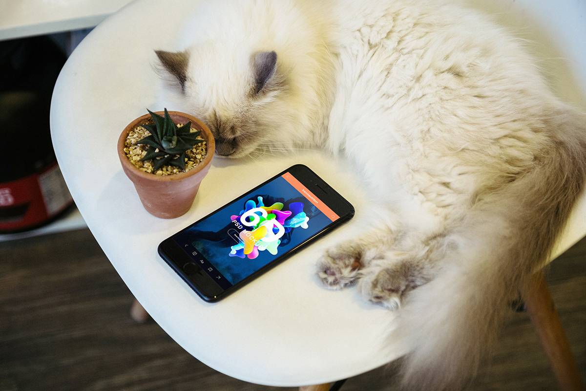 iPhone 7 Realistic Photo Mockup with Cat for UI UX Designers